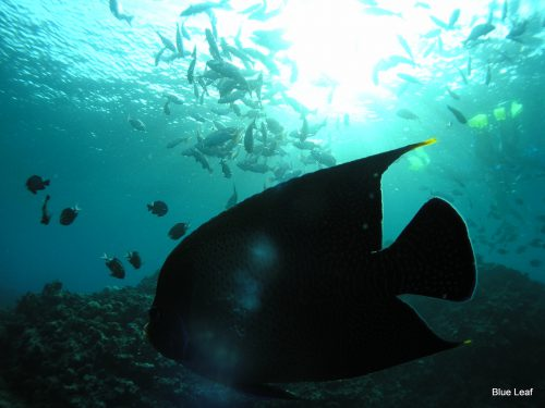 魚たちが群がる神秘的な青の洞窟は超おすすめスポット
