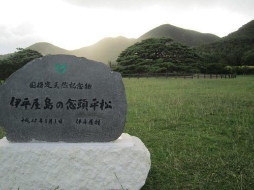 伊平屋島の念頭平松、沖縄本島最北の島、月あかりで走る伊平屋ムーンライトマラソン