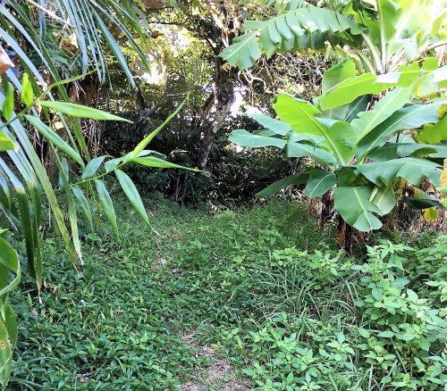 自然を祀るのが沖縄の信仰。神の島大神島