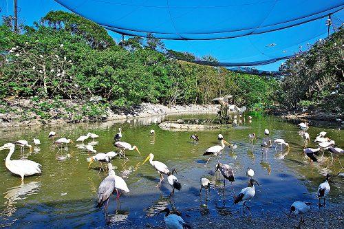 巨大な鳥かごネオパーク、ここにUSJができるという噂があった