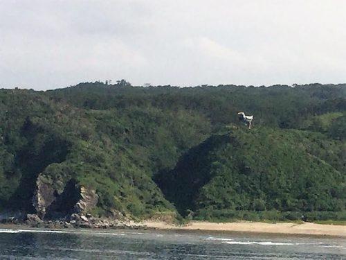 沖縄本島最北端辺戸岬から見えるヤンバルクイナ