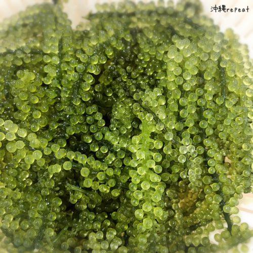 沖縄県産 沖縄県南城市の海水で育った海ぶどうを生け簀で保管して販売してます。