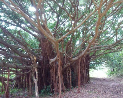 宮崎駿さんプロデュースの建設予定地だった久米島の新しいスポット銭田森林公園