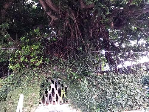 那覇・壺屋を「おきなわスローツアー」ゆったりまち歩きでみつけた拝所の一つ