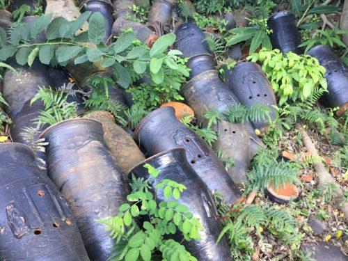 那覇・壺屋をゆったりまち歩きでみつける「おきなわスローツアー」で見た陶器の数々