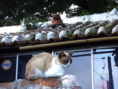 那覇・壺屋を「おきなわスローツアー」ゆったりまち歩きでみつけた猫シーサー
