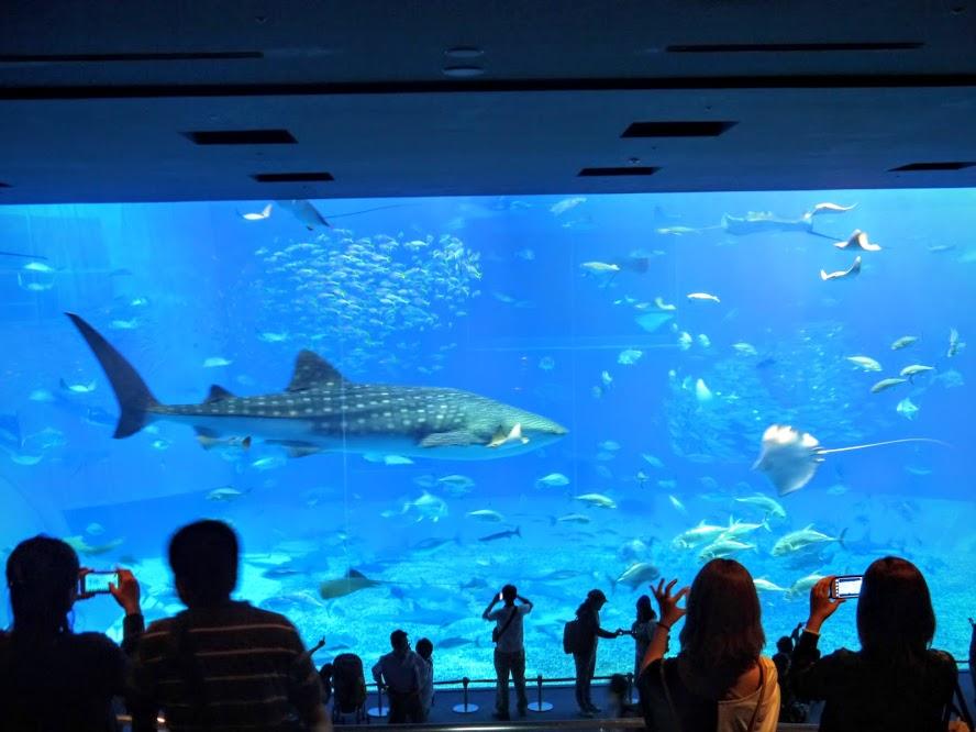 水族館に入ると。ついつい人気のジンベイザメを見に急いでしまいますが、実はもっと色々楽しめるところがあります。限られた旅行日程の中で有効に時間を使いたいものです。