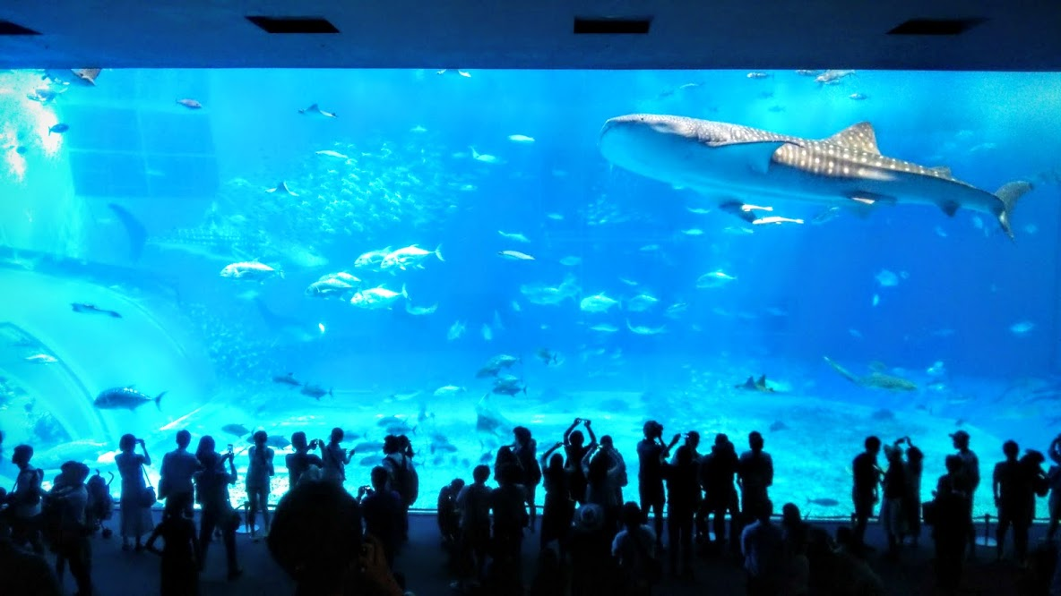 美ら海水族館のアクセス方法と5つのお得な楽しみ方!