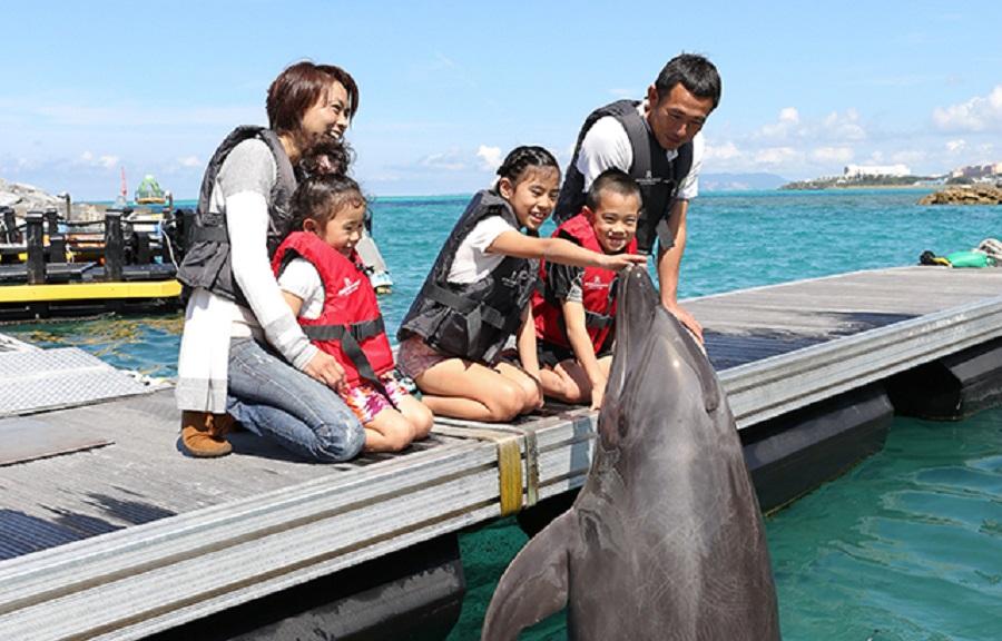 沖縄のホテルで子連れ旅行に人気!イルカと触れ合えるのが楽しい。