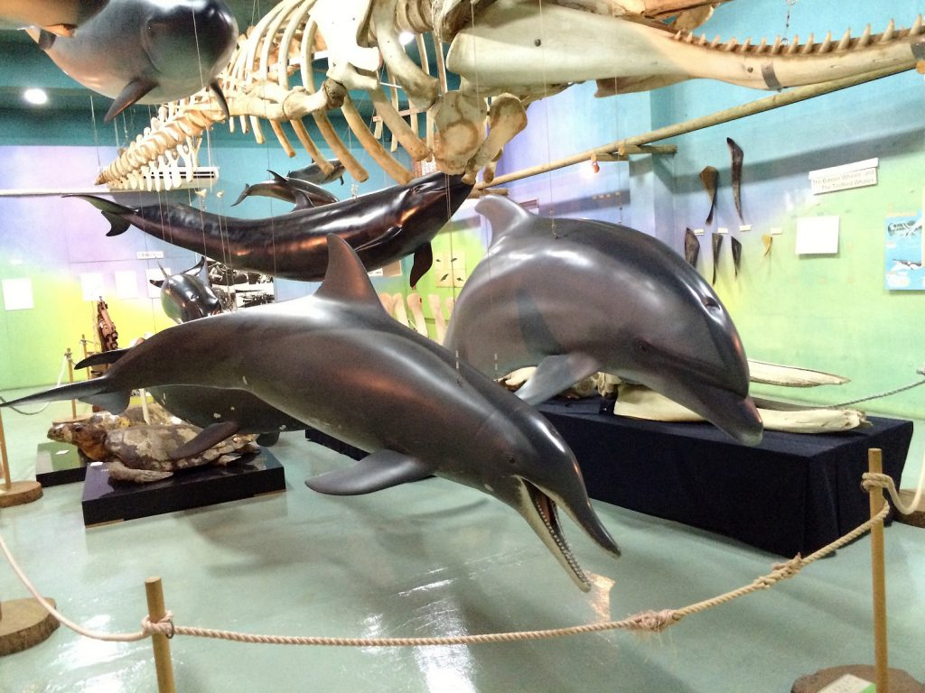 沖縄本島北部「やんばる」の生活と自然がテーマの「名護博物館」いるか