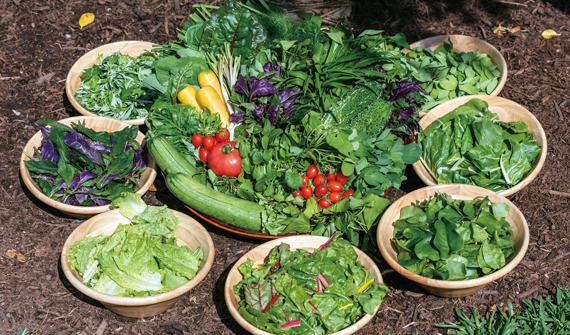 55種類の島野菜、薬草が食べ放題、名護「美ら島キッチン」
