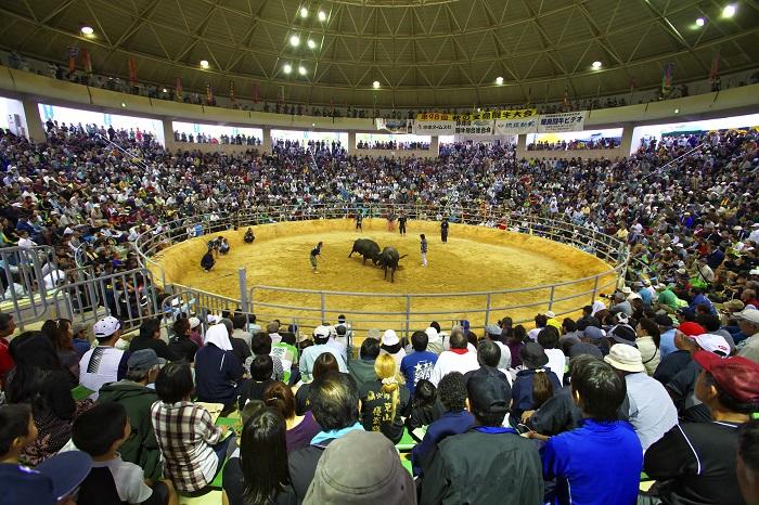石川ドームの闘牛大会