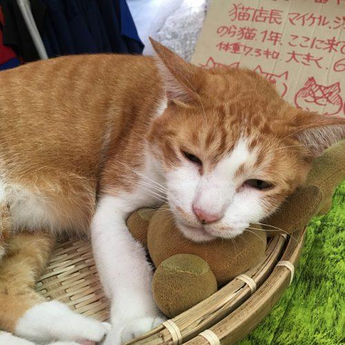 猫大好き! にゃんこ天国沖縄!!