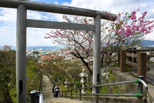 名護城公園の階段さくら祭り期間中