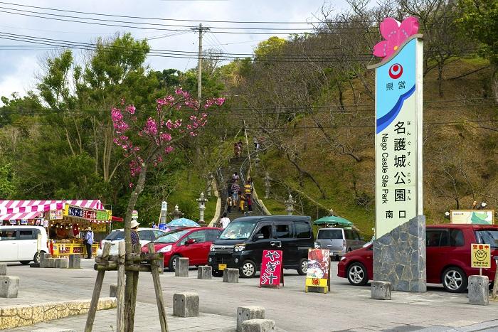名護城公園沖縄の桜は日本一早い、さくら祭り