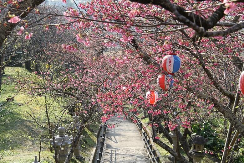 名護城公園のさくら祭りは見事に咲いている