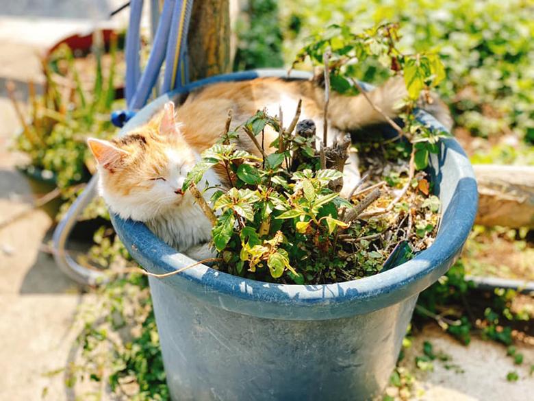 猫大好き!にゃんこ天国沖縄!!