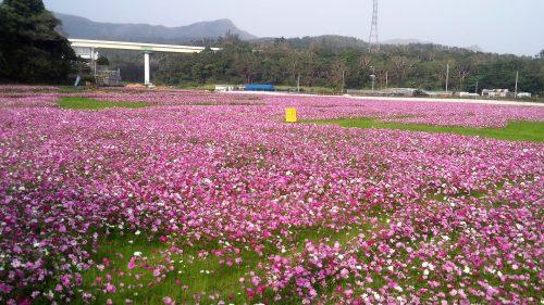 今、沖縄は「春・夏・秋」が一度に満開!!