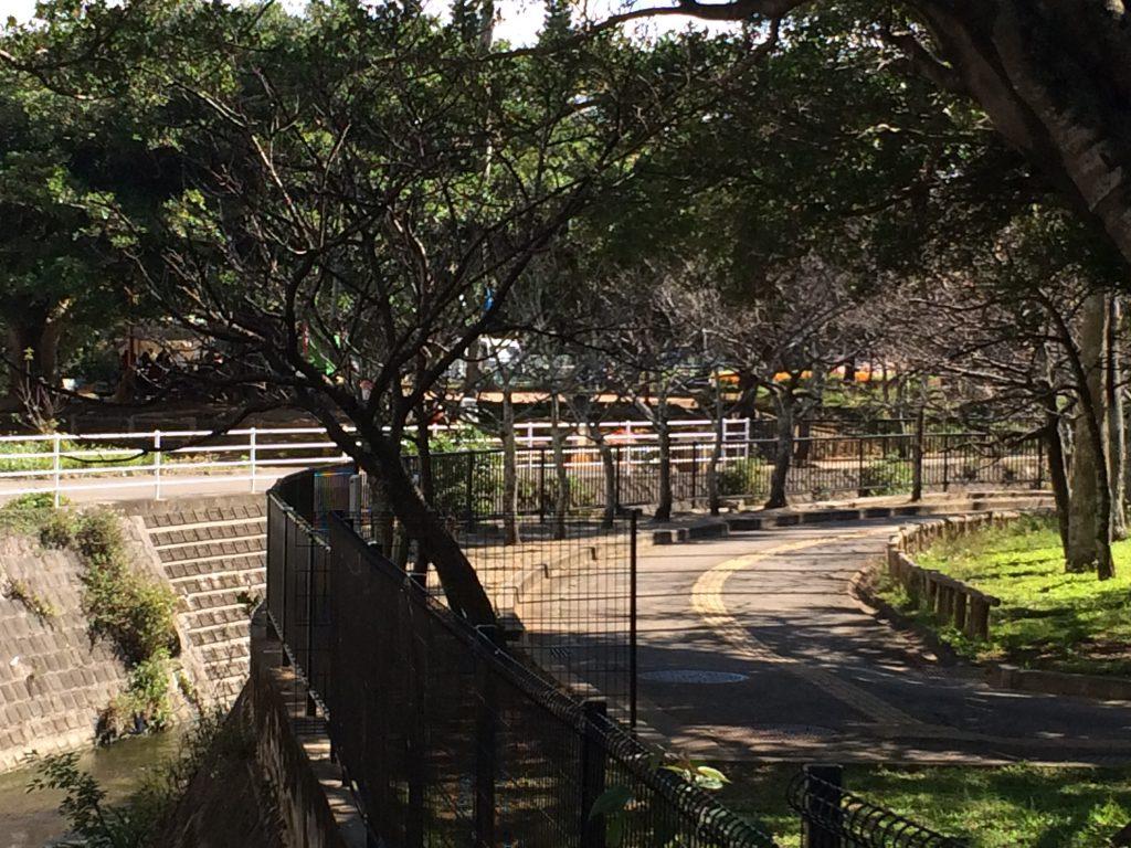 那覇与儀公園の桜まつり情報と蒸気機関車D51