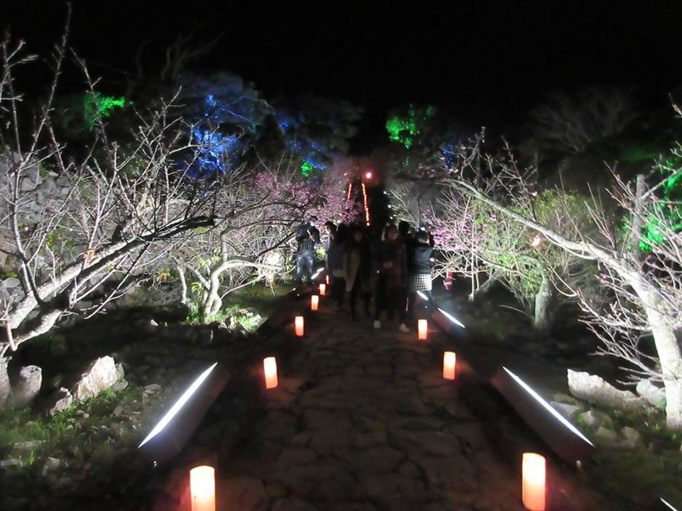 名護、今帰仁、本部さくら祭り今帰仁城はライトアップされます。