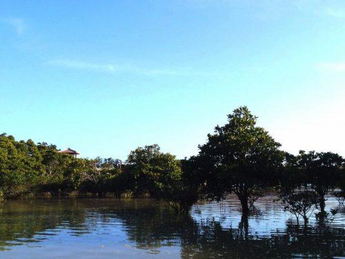 沖縄でしか見られないマングローブってなんだろう?