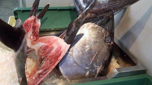 泊いゆまちとは、那覇泊港のとれたて新鮮魚市場で見たまぐろの頭