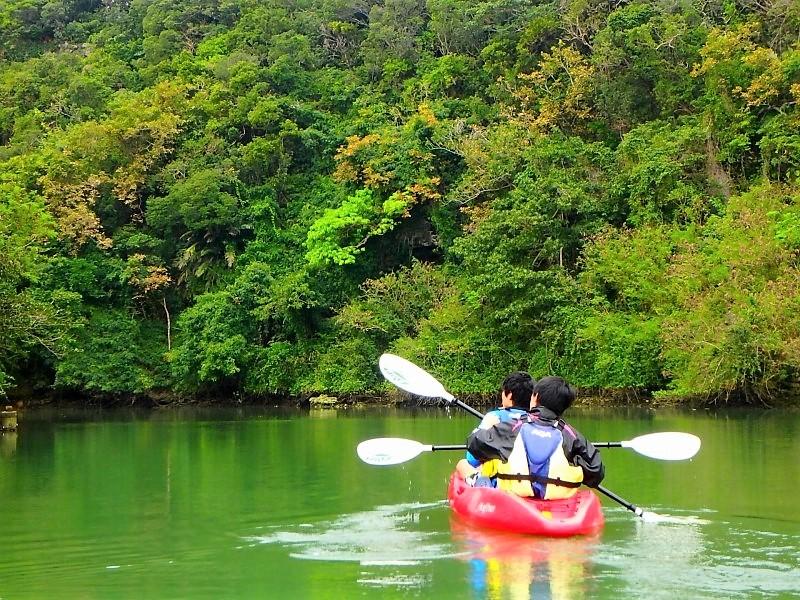 カヤックで嘉手納町の比謝川を登っていくと熱帯地域特有のマングローブ、ガジュマルがみられる。