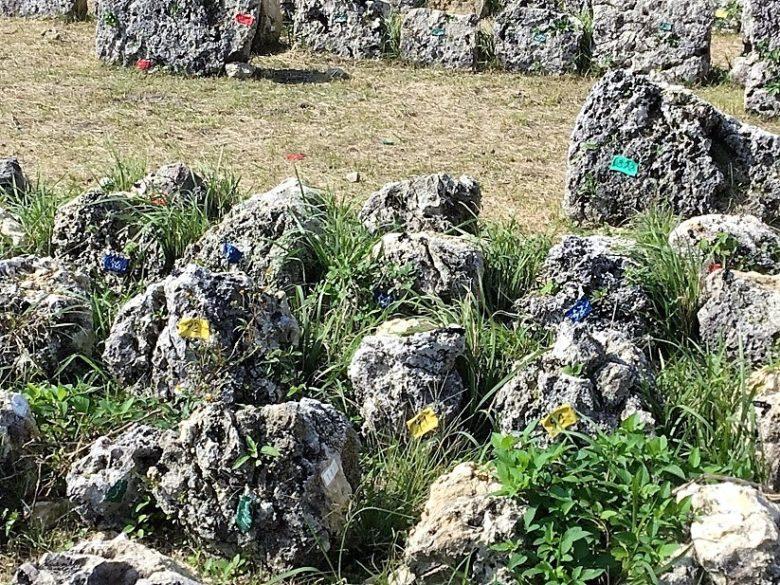 中城城跡の石積み修復