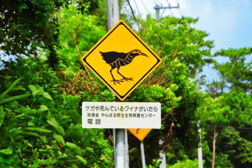 ヤンバルクイナ交通事故注意!「ウフギー自然館」