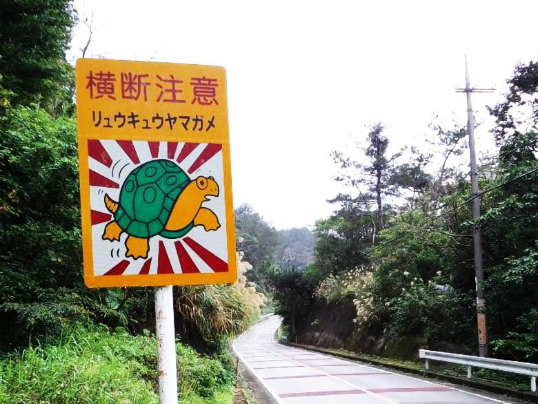 リュウキュウヤマガメも交通事故注意