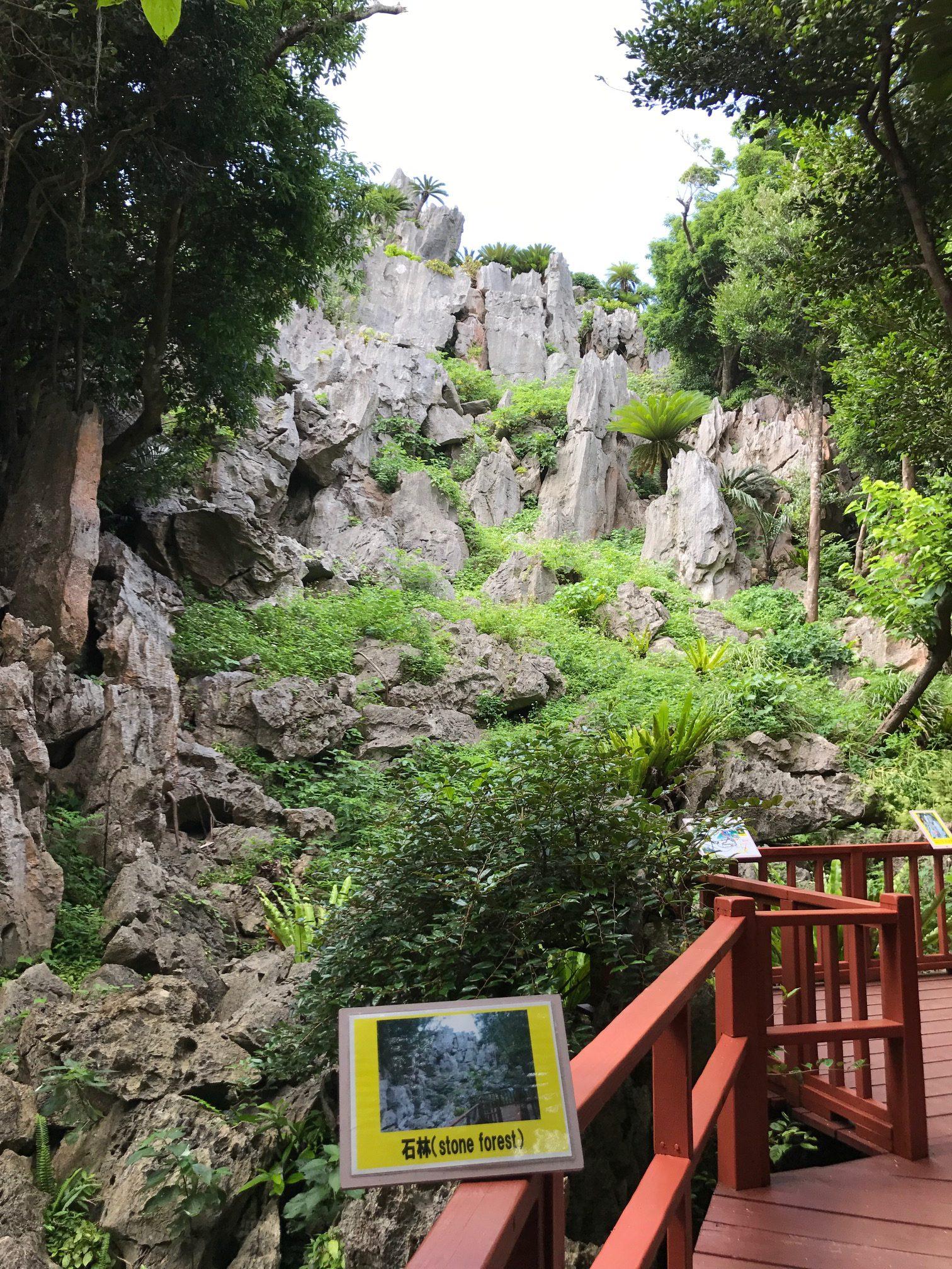 大石林山の石林