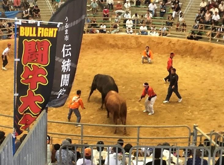 石川の闘牛