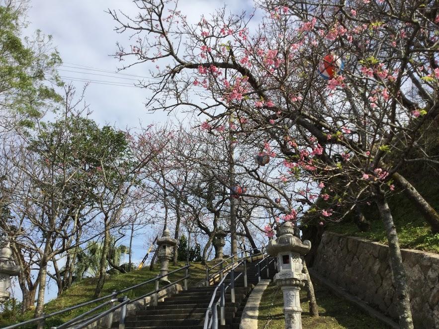 名護城公園2分咲き桜