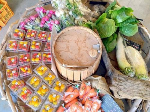 やんばるの食フェス!地元育ち野菜に珈琲、泡盛、芸能