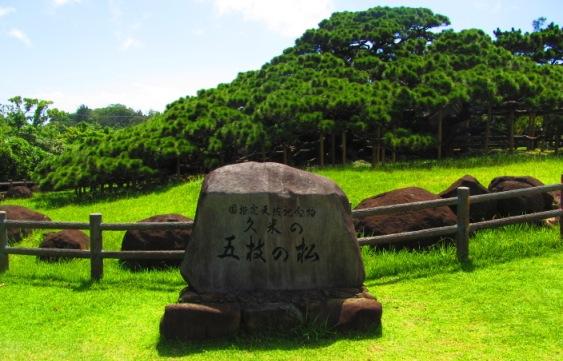 久米島夏季限定くーみん号で五枝の松
