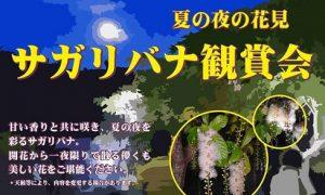 夜に咲いて明け方に散る幻想的な花「サガリバナ鑑賞会」