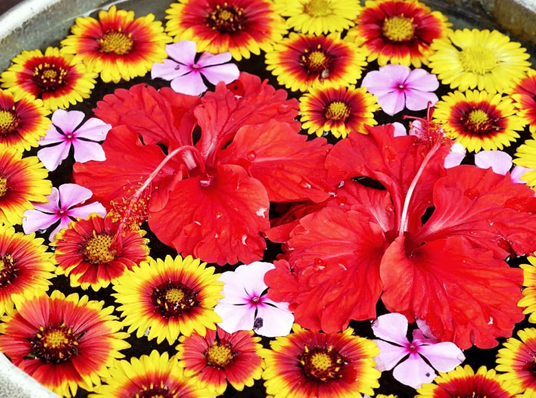春~夏の沖縄は花天国!愛でて楽しもう沖縄の花たち♪