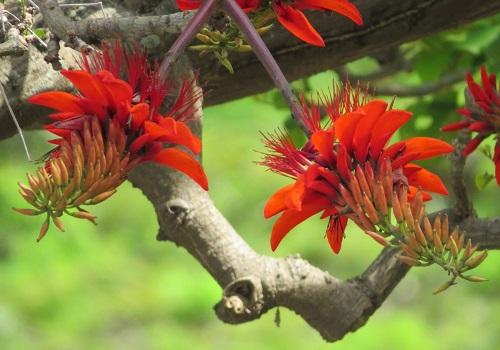 夏の沖縄は花天国!愛でて楽しもう沖縄の花たち