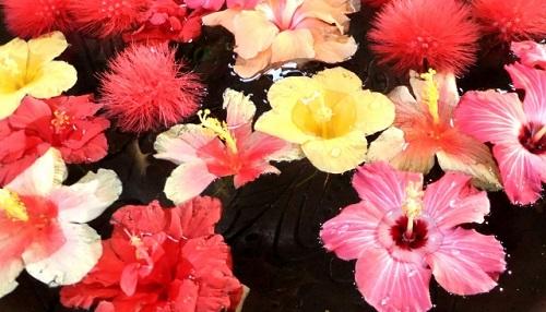 夏の沖縄は花天国!愛でて楽しもう沖縄の花たち♪