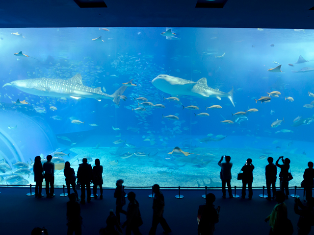 美ら海水族館が夏休み限定で夜も営業!料金は?!