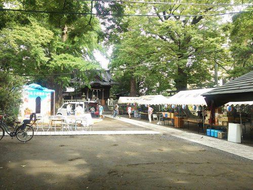 神奈川県逗子から広がる大きな輪「第5回逗子沖縄まつり」