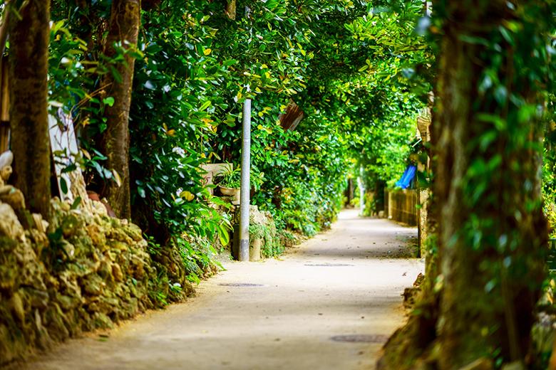 フクギ並木は台風に強い防風林