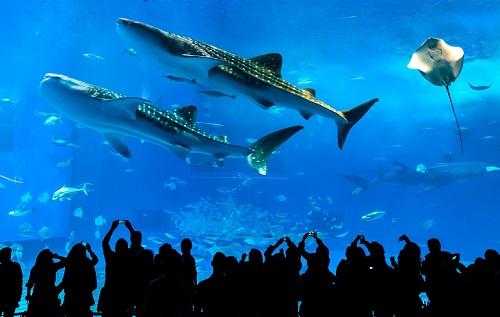 沖縄本島をドライブで巡る北部観光モデルコース美ら海水族館