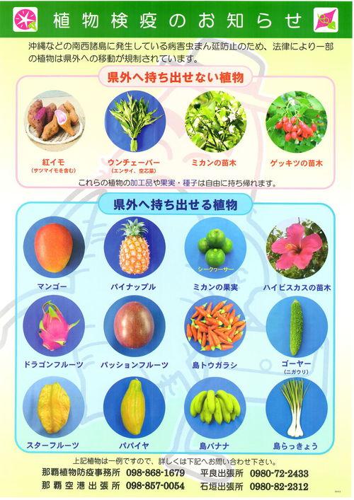 沖縄野菜を家庭菜園で育てて、沖縄料理を作ろう