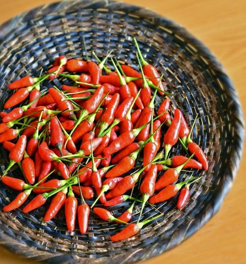 沖縄野菜を家庭菜園で育てて、沖縄料理を作る島唐辛子