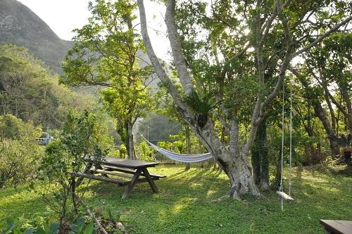 森カフェは沖縄の自然いっぱい、沖縄本島北部大宜味村がじまんろー木々の中で癒されたい5選