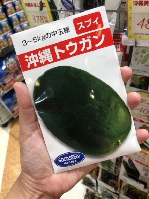 沖縄野菜を家庭菜園で育てて、冬瓜で沖縄料理を作ろう