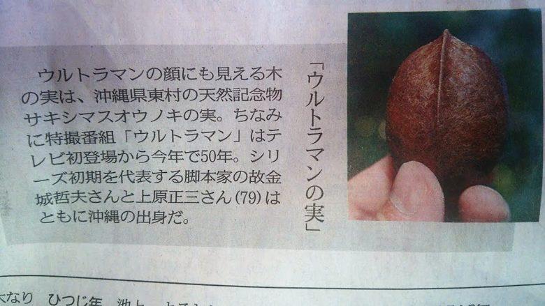 沖縄とウルトラマンの深い関係、ウルトラの実はサキシマスオウノキ東京新聞より