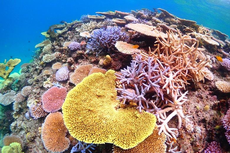 伊平屋ヴィレッジトレイルRUN&ウォーク、伊平屋島のサンゴ