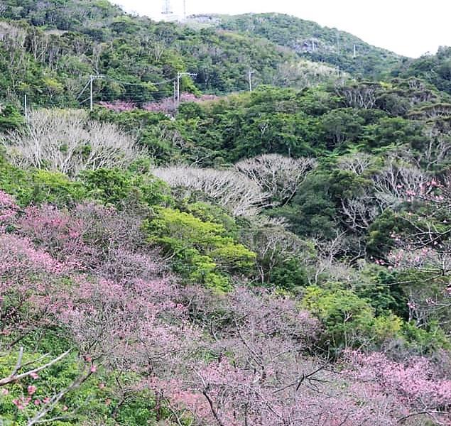 名護グスク山頂